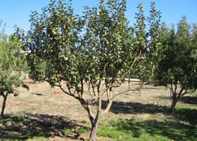 a-fruit-orchard.jpg