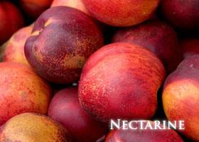 f-nectarine.jpg